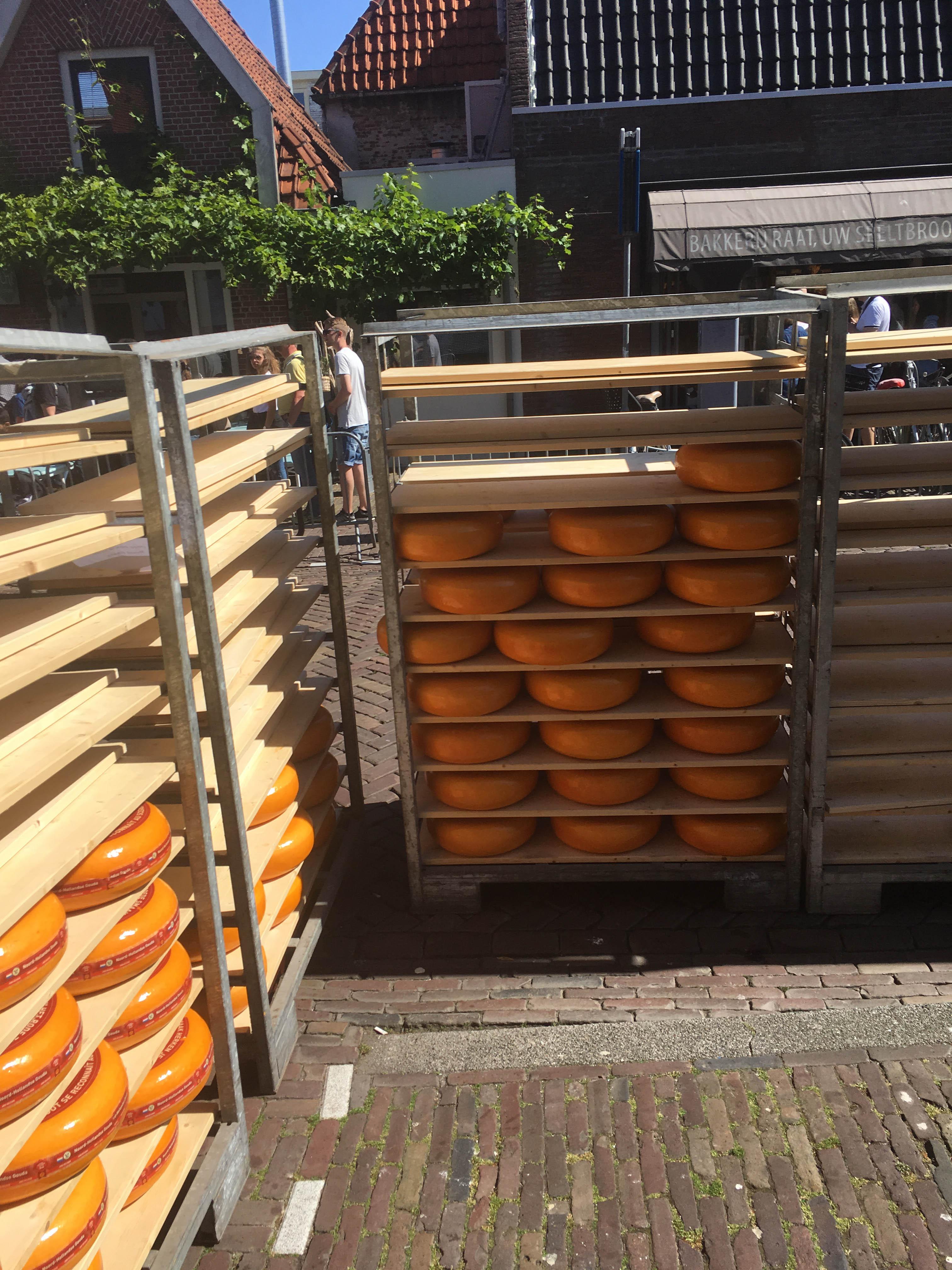 Galeria serów  Alkmaar